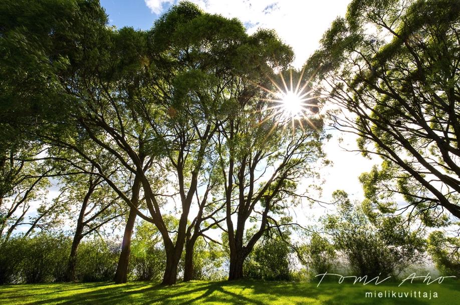 Arboretum Mielikuvittaja Tomi Aho