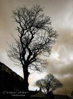 Puut Mielikuvittaja Tomi Aho